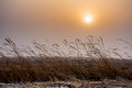 Misty morning sunrise over grass cold warm tone Royalty Free Stock Photo
