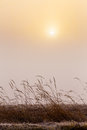 Misty morning sunrise over grass cold warm tone Stock Image