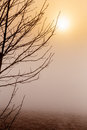 Misty morning sunrise over tree cold warm tone Stock Photography