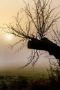 Misty morning sunrise over tree cold warm tone Stock Photos