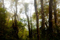 Misty mountain forest of Mount Kinabalu, Royalty Free Stock Photo