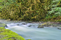 Misty mountain river clear under the branches of boxwood Royalty Free Stock Photography