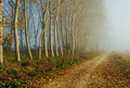 Misty path Royalty Free Stock Photos