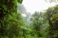 Misty rainforest in Monteverde cloud forest reserve Royalty Free Stock Photo