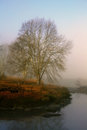Misty river a dormant tree in winter on a riverbank Stock Photography