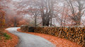 Misty road in autumn Royalty Free Stock Photos