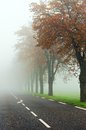 Misty road a country lined with trees Royalty Free Stock Photo