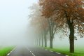 Misty road empty country drowned in the fog Stock Photo