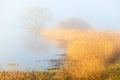 Misty spring morning lake Royalty Free Stock Photo