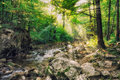 Misty stream woods beautiful peaceful in green forest Stock Image