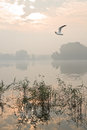 Misty sunrise at the lake birds reed and a Royalty Free Stock Images