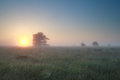 Misty sunrise over summer marsh drenthe netherlands Royalty Free Stock Photos