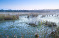Misty swamp in the morning fog over with cotton grass Royalty Free Stock Photography