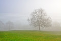 Misty tree Royalty Free Stock Image