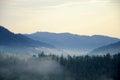 Misty Tree On The Mountain Slo...