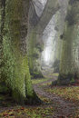 Misty trees in autumn forest foggy day and winding trail Royalty Free Stock Photography