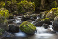 Misty water mountain forest stream Royaltyfri Fotografi