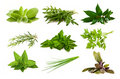 Mix aromatic herbs Royalty Free Stock Photo