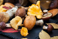 Mix of autumn wild forest edible mushrooms on black board Royalty Free Stock Photography