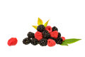 Mix berries isolated on whit background Royalty Free Stock Image