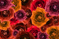 Mix Collage Of Rose Flowers Ba...