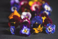 Mix of edible flowers Royalty Free Stock Photo