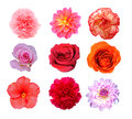 Mix of flower Royalty Free Stock Photos