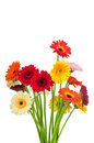 Mix of gerber flowers Royalty Free Stock Photo