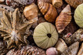 A mix of seashells different kinds all mixed together Stock Image