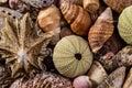 A Mix of Seashells