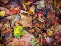 mixed autumn leaves background with different shades of fall col Royalty Free Stock Photo