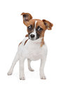 Mixed breed dog Stock Images