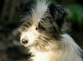 Mixed breed dog on abstract background shallow dof Royalty Free Stock Photo