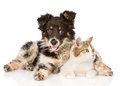 Mixed breed dog and cat looking away. isolated on white Royalty Free Stock Photo