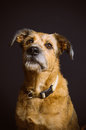 Mixed breed dog portrait on black background Stock Photography