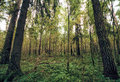 Mixed forest in early autumn in central russia Royalty Free Stock Photos