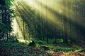 Mixed Forest in the Morning Light Royalty Free Stock Photo