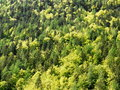 Mixed forest tree tops Stock Images