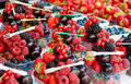 Mixed fruits in doses Royalty Free Stock Photo