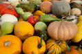 Mixed Gourds & Pumpkins Royalty Free Stock Photography