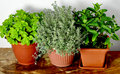 Mixed herbs Royalty Free Stock Photo