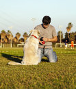 A mixed labrador female dog looking at the chew toy her trainer is holding on a sunny day at the park Royalty Free Stock Photography
