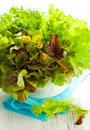 Mixed lettuce in a bowl Stock Photo