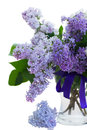 Mixed lilac in vase isolated on white background Royalty Free Stock Photo
