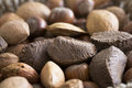 Mixed Nuts Close Up Royalty Free Stock Photo