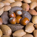 Mixed nuts in the shell selection of brazil almonds walnut and hazelnuts Stock Photos