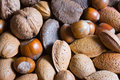 Mixed nuts in the shell selection of brazil almonds walnut and hazelnuts Stock Image