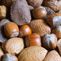 Mixed nuts in the shell selection of brazil almonds walnut and hazelnuts Royalty Free Stock Image