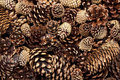 Mixed Pinecone Background