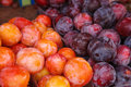 Mixed plum fruits plums close up hq photography Stock Photography